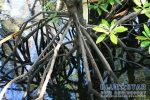 Mangrove-Roots-Mesh