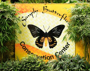 simply-butterflies-conservation-center