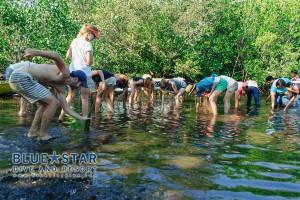 Mangrove-Planting